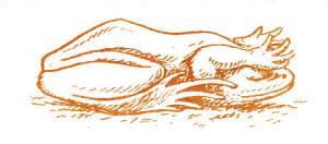 Как дышат лягушки во время зимовки  под водой?
